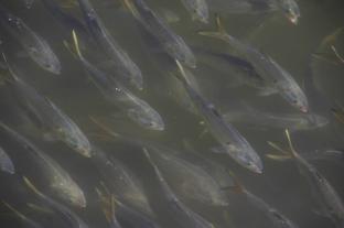 Fish -2